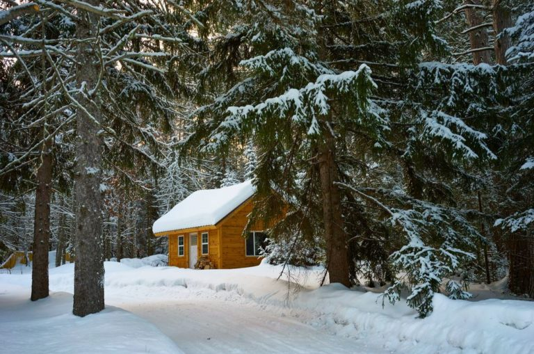 brown-house-near-pine-trees